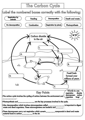 25+ Best Ideas About Carbon Cycle On Pinterest  5th Grade Science, Carbon Dioxide Cycle And