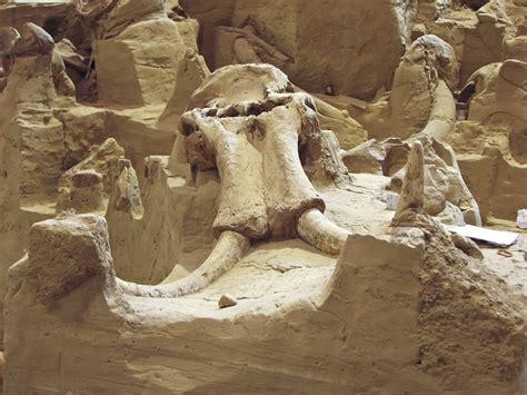 mammoth site  hot springs south dakota