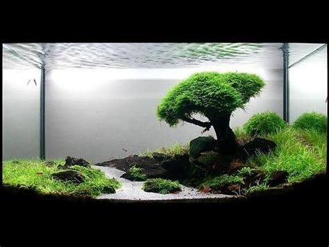 cool aquascapes zen tree and scenic aquarium fish trees