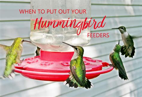 top 28 when to put hummingbird feeders out