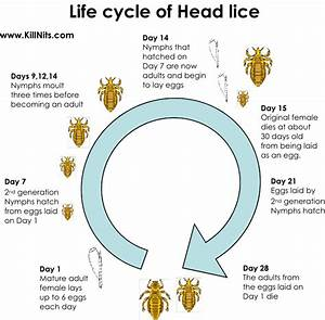Lice? Yuck. Ain't Nobody Got No Time For That. - First ...