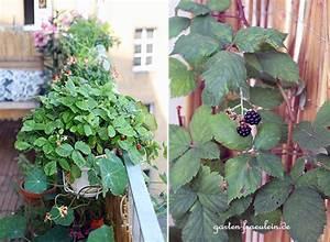 balkon impressionen garten fraulein der garten blog With französischer balkon mit der unkrautfreie garten
