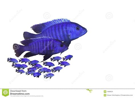 fish family stock images image