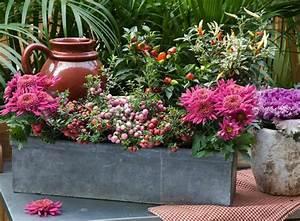 Fleur D Hiver Pour Jardinière : choisir une plante pour jardini re quelques id es et ~ Dailycaller-alerts.com Idées de Décoration