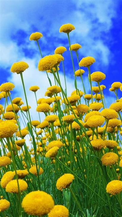 Yellow Iphone Flowers Sky Background 6s Plus