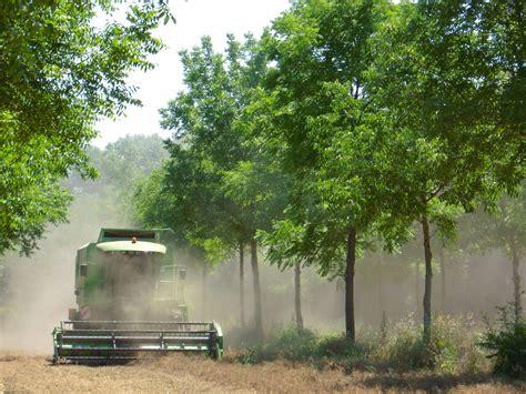 chambre agriculture du var dispositif agroforesterie tempérée rap dispositifs de