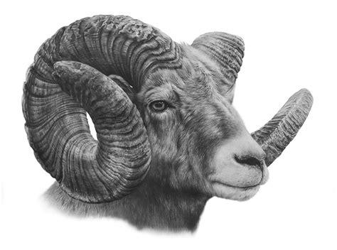pin  ella lance  drawings wildlife art realistic