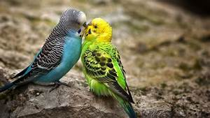 Cute Little Love Couple Pictures HD Free Download