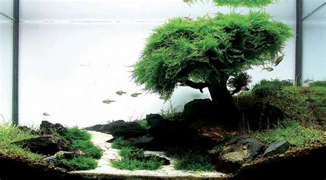 Java Moss Aquascape by Java Moss How To Grow Carpets Walls Trees And More