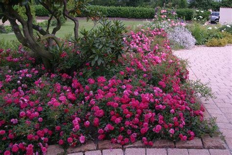 Blühende Pflanzen Schatten by Bodendecker Pflanzen Und Pflegen Gardening And