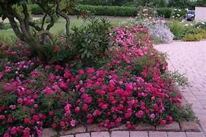 Blau Blühender Bodendecker : bodendecker pflanzen und pflegen gardening and landscaping pinterest gardens and flowers ~ Frokenaadalensverden.com Haus und Dekorationen