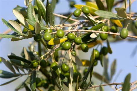 la cuisine d olivier idée cadeau 59 ans de mariage pour les noces d 39 olivier