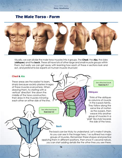 Anatomy Drawing Pdf Free Download At Best Way To Study