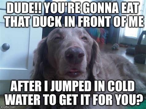 High Dog Meme - high dog latest memes imgflip