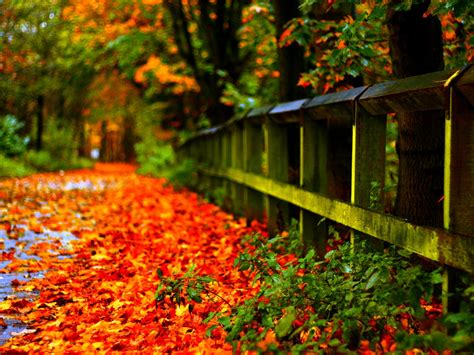 Attractive Fall Lock Screen Iphone Wallpaper by Autumn Leaves Desktop Wallpaper Hd 1920x1200