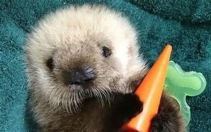 Animals Otter Zoo Week Sea Animal Cutest