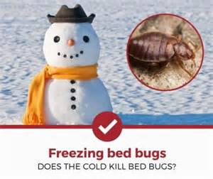 bed bugs kill cold does