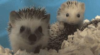 adorable animal gifs