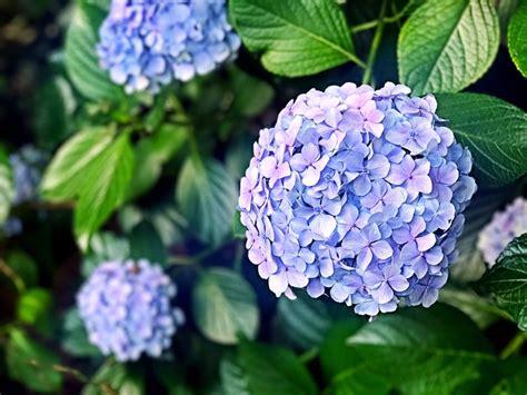 piante perenni da fiore piante perenni aree giardino variet 224 e coltivazione