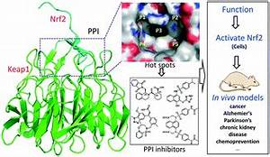 Small molecules inhibiting Keap1–Nrf2 protein–protein ...