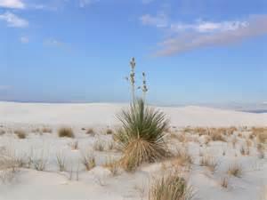 Alamogordo New Mexico White Sands National Monument