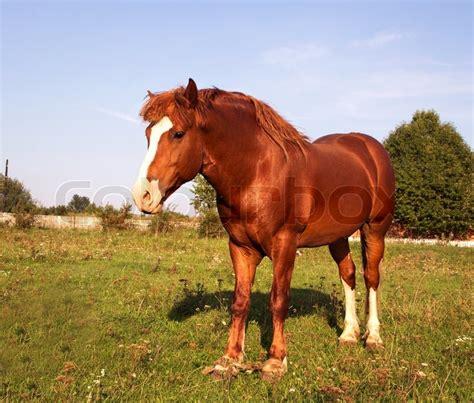 horse strong