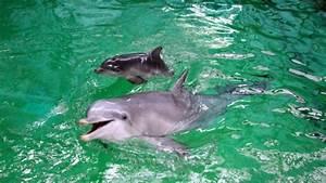 Ob Wahl Duisburg : delfinbaby delfinbaby im duisburger zoo ist unerwartet ~ A.2002-acura-tl-radio.info Haus und Dekorationen