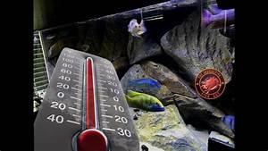 Optimale Aquarium Temperatur : what is the ideal temperature for lake malawi african cichlids jetsu 300 watt aquarium heater ~ Yasmunasinghe.com Haus und Dekorationen