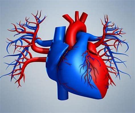 heart diagram   printable word excel eps psd
