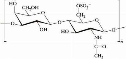 Repeating Keratin Sulfate Unit Monosaccharides Glycosidic Describe