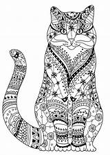 Cat Cats Coloring Pages Adults Wise Very Zentangles Drawn Adult Animals sketch template