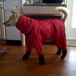 dog snowsuit  boots     ellie  dog