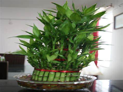 best small indoor plants low light indoor house plants low light indoor houseplants small