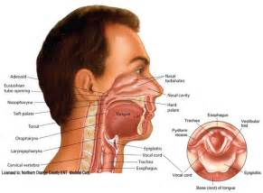 Nose as related to ear nose and throat pictures nose and throat diseases ear nose and throat disease symptoms ear nose ccuart Images