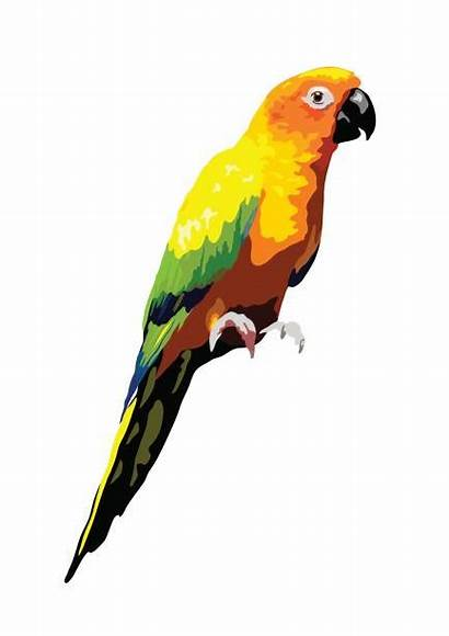 Conure Sun Vector Illustrations Parrot Clip Tropical
