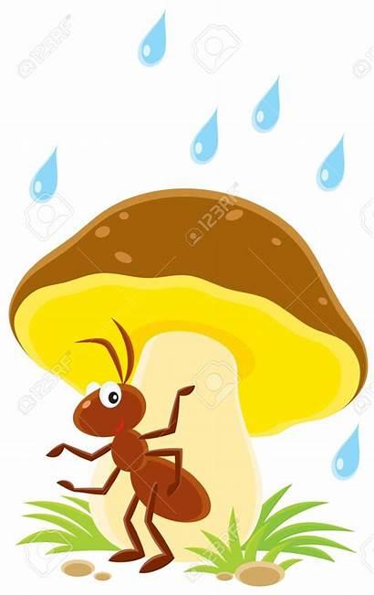 Clipart Mushroom Ant Clip Under Illustration Rain