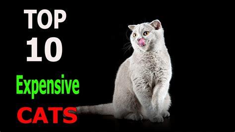 cat breeds expensive animals