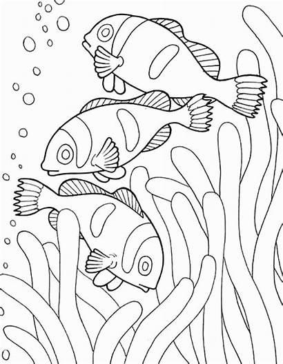 Coloring Ocean Sea Creatures Drawing Fish Habitat