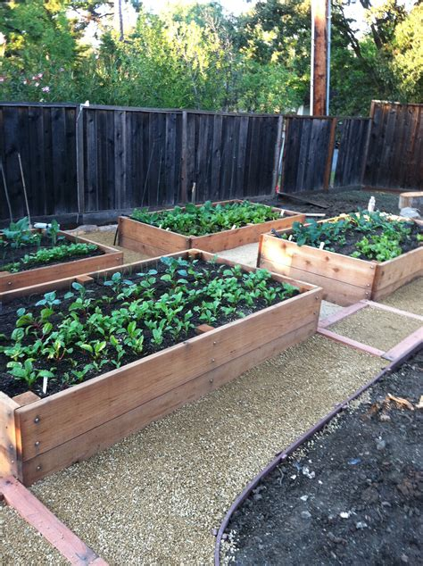 Raised Veggie Beds  Wildcat Farmers