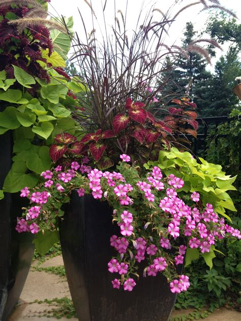 flowers for shaded patio patio flowers full sun patio flowers pinterest patios flower and gardens
