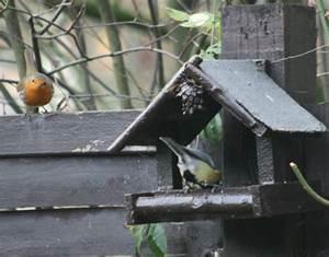 Vögel Füttern Ab Wann : ab wann sollte man mit der f tterung der v gel beginnen medienwerkstatt wissen 2006 2017 ~ Frokenaadalensverden.com Haus und Dekorationen