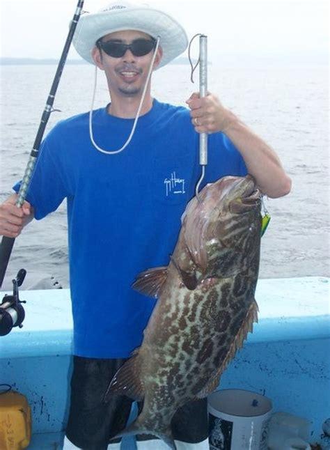 grouper broomtail salas 7x catch strikes jig again