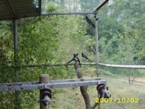 Fliegen Fernhalten Balkon : vogelabwehr spatzen gel nder f r au en ~ Whattoseeinmadrid.com Haus und Dekorationen