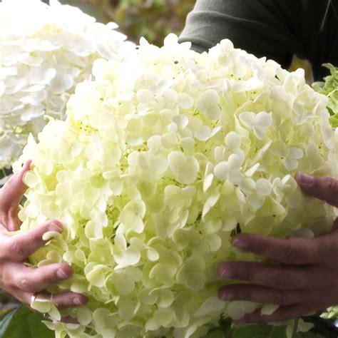 piante da fiore perenni resistenti al gelo piante da fiore resistenti al freddo con piante perenni