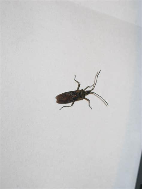 insecte de cuisine bete dans la maison 28 images bete brunes dans la