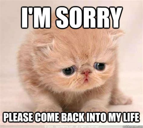 I'm sorry Please come back into my life - Sorry Cat ...