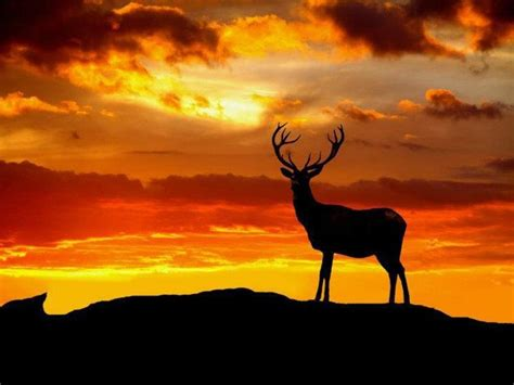 animals nature deer stags wallpapers hd desktop