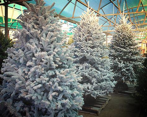 christmas trees  sale fossil creek tree