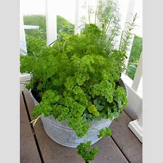 17 Best Images About Gardening  Container On Pinterest
