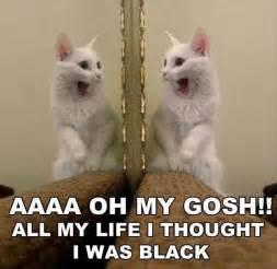 white cat meme animal pictures 32 pics